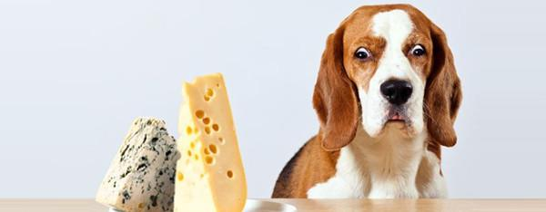 Min hund vil ikke spise – hvad kan jeg gøre ?