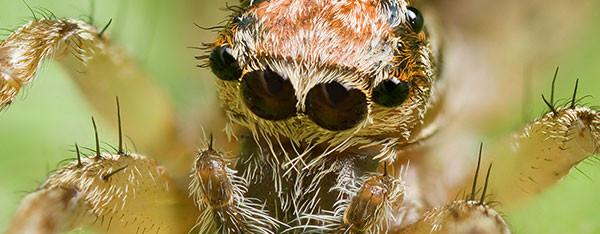Kaster en edderkop op?