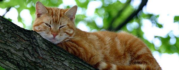 Pasningsvejledning for Katte