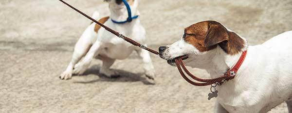 Hundesele – Sådan vælger du den rigtige