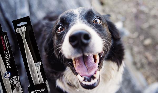Hvordan skal man pleje hundens/kattens tænder? Og hvorfor man altid skal gøre det